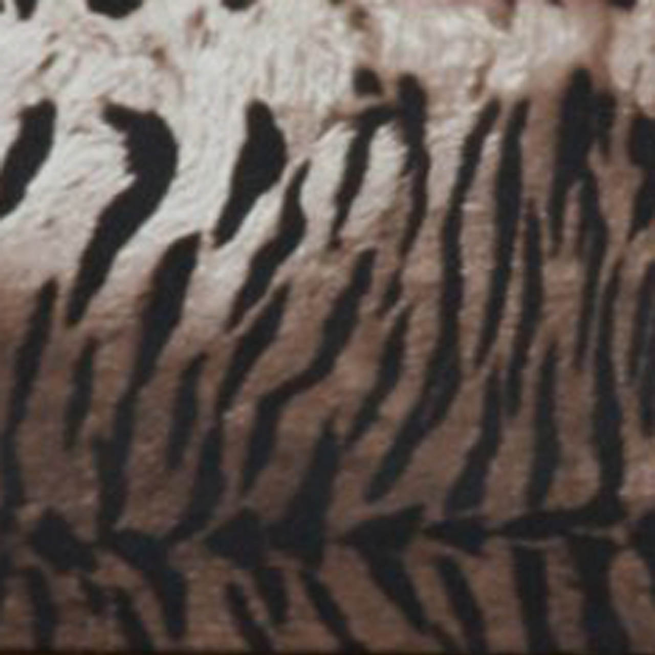 LEATHERITE WITH TIGER PRINT
